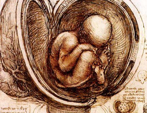 Leonardo: anatomia e movimento